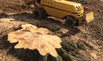 Stump Removal in Aurora IL Stump Removal Services in Aurora IL Stump Removal Professionals Aurora IL Tree Services in Aurora IL