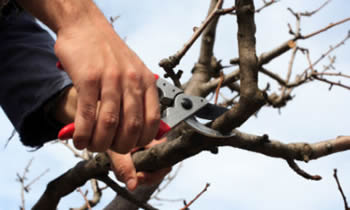 Tree Pruning in Aurora IL Tree Pruning Services in Aurora IL Quality Tree Pruning in Aurora IL