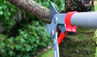 Tree Pruning Services in Aurora IL